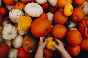 Variety of pumpkins with child's hands holding small orange gourd